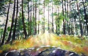 Sunlight Thro' the Pine