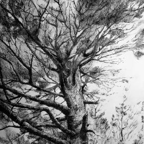 Pining under the Pine II